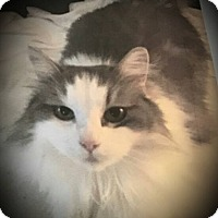 Adopt A Pet :: Fuzzy - Youngstown, OH