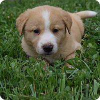 Adopt A Pet :: Booker - Greeneville, TN