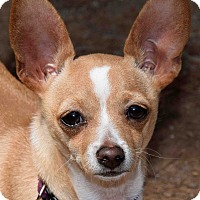 Adopt A Pet :: Aiden in Tucson - Phoenix, AZ
