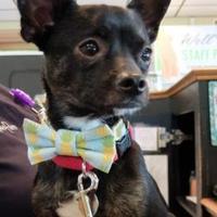Adopt A Pet :: Buster - Irmo, SC