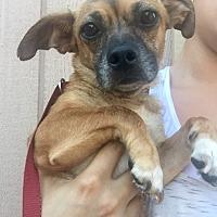 Adopt A Pet :: Norma Jean - Santa Ana, CA