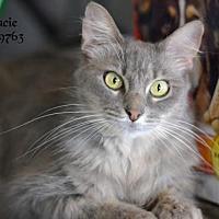 Adopt A Pet :: Gracie - Montgomery, TX