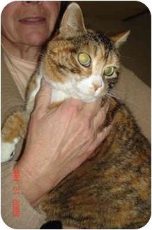 Calico Cat for adoption in Colmar, Pennsylvania - Ginger