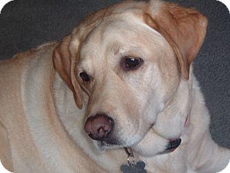 Labrador Retriever Mix Dog for adoption in Lancaster, California - Max