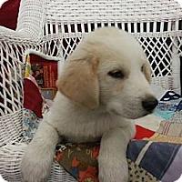 Adopt A Pet :: Logan - Linton, IN