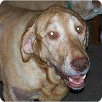 Adopt A Pet :: Nellie - Altmonte Springs, FL