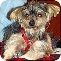 Adopt A Pet :: Avery - Tallahassee, FL