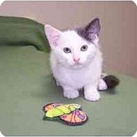 Adopt A Pet :: Pete - Secaucus, NJ