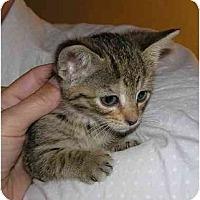 Adopt A Pet :: Daisy - Bristol, RI