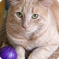 Adopt A Pet :: Dieter - Chicago, IL