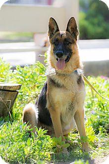 German Shepherd Dog Mix Dog for adoption in La Jolla, California - Pinky