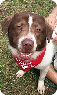 Labrador Retriever Mix Dog for adoption in Voorhees, New Jersey - Eddy