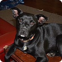 Adopt A Pet :: Jake - Bedminster, NJ