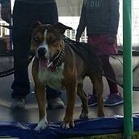 Adopt A Pet :: Brady - Middletown, OH