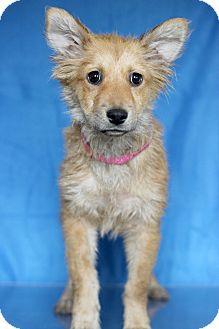 Terrier (Unknown Type, Medium) Mix Puppy for adoption in Waldorf, Maryland - Raisin