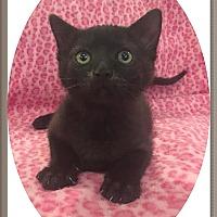 Adopt A Pet :: Templeton - Mt. Prospect, IL