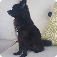 Adopt A Pet :: Miss Priss - conroe, TX