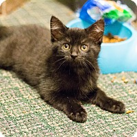 Adopt A Pet :: Gwen - Morgantown, WV