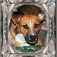 Adopt A Pet :: Scooby - Crowley, LA