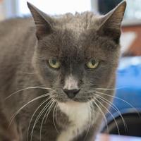 Adopt A Pet :: Tino - Richmond, VA