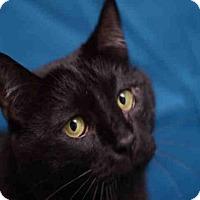 Adopt A Pet :: BONGO - Fort Collins, CO