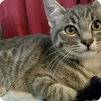 Adopt A Pet :: Ash Ketchum - Rosemead, CA
