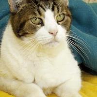Adopt A Pet :: Ryan - Bristol, IN