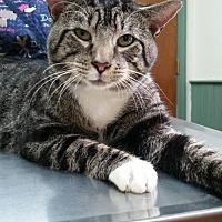 Adopt A Pet :: Arnold - Codorus, PA