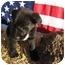 Photo 3 - Border Collie/Labrador Retriever Mix Puppy for adoption in Marion, North Carolina - PANDORA