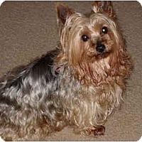 Adopt A Pet :: Gaylin - LE MESA, CA