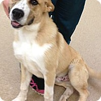 Adopt A Pet :: Baloo - Lancaster, OH