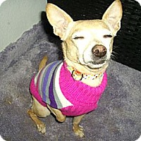 Adopt A Pet :: Susie - Sheridan, OR