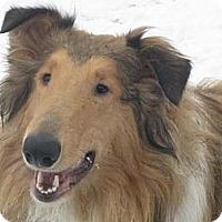Adopt A Pet :: Stewie - Minneapolis, MN