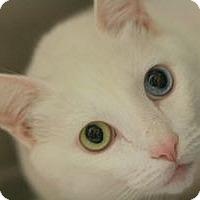Adopt A Pet :: Papito - Canoga Park, CA