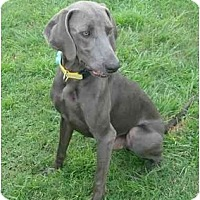 Adopt A Pet :: *ADOPTION PENDING*Smokie - Eustis, FL