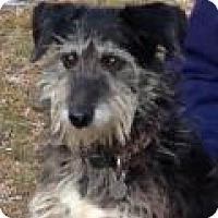 Adopt A Pet :: Trudi - Irmo, SC