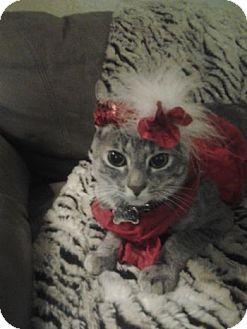 Domestic Shorthair Kitten for adoption in Davis, California - Tinkerbell
