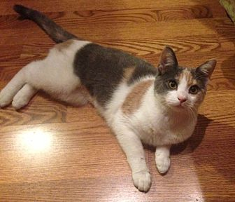 Calico Cat for adoption in Brooklyn, New York - Princess Peach