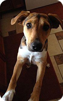 Blue Heeler Mix Dog for adoption in Owatonna, Minnesota - Scout