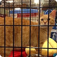 Adopt A Pet :: Katrina - Muncie, IN