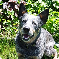 Adopt A Pet :: Finn - Delano, MN