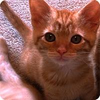 Adopt A Pet :: Pepe - St. Louis, MO