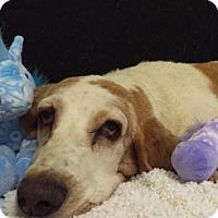 Adopt A Pet :: Sandie - Acton, CA