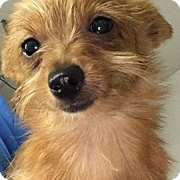 Adopt A Pet :: Nugget - Washington, PA