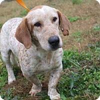 Adopt A Pet :: Speckles - Boston, MA