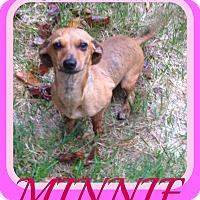 Adopt A Pet :: MINNIE - Manchester, NH