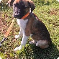 Adopt A Pet :: Earl - Quinlan, TX