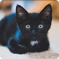 Adopt A Pet :: Mowgli - Vancouver, BC
