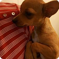 Adopt A Pet :: Karla - Rosemead, CA