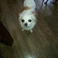 Adopt A Pet :: Emma - Dothan, AL